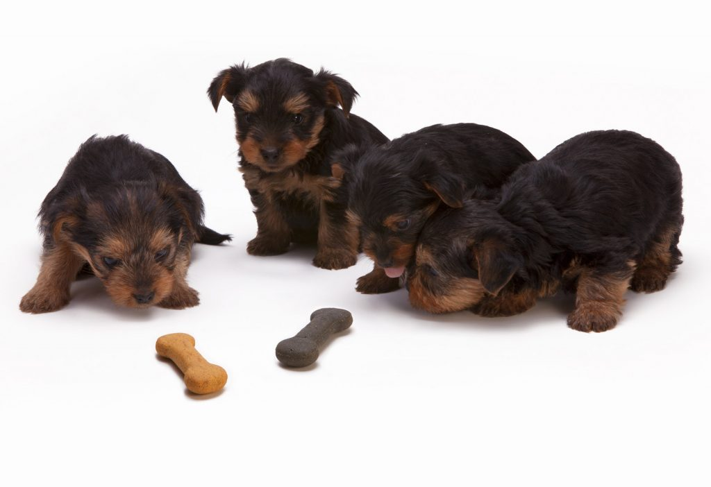 What should you consider when starting a pet food business